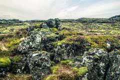 Moss on a lava field in iceland Stock Photos