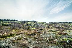 Lava field in Iceland with moss Stock Photos