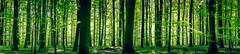 Idyllic forest in the springtime - stock photo