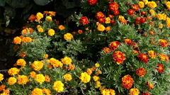 The exterior of a garden. A flowerbed with bright yellow and orange flowers. Stock Footage