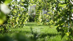 View of the inner garden. The vineyard. - stock footage