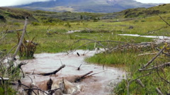 Muddy floodwater running down a gully on the paramo Stock Footage