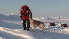 Tourist making photo of Alaskan sled dogs. Stock Footage