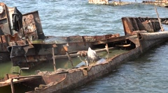 Rusty metal frame barges in the water, wreck on river port, 4k Stock Footage