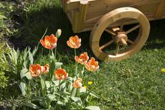 tulips and flower bed on the lawn - stock photo