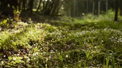 Blooming clover on a glade - spring Stock Footage