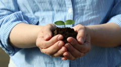 Female's hands holding a small green sprout - stock footage