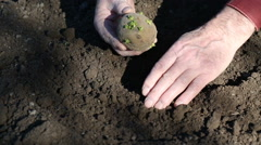 The old man hands planting potatoes Stock Footage