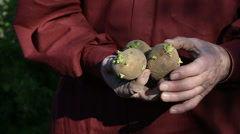 The old man hands holding potatoes for planting - stock footage