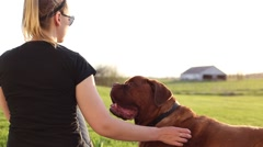 Pretty woman pets big dog Stock Footage
