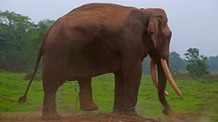 Elephant in Nepal Stock Footage