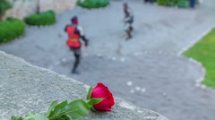 Red rose and a fight between two knights Stock Footage