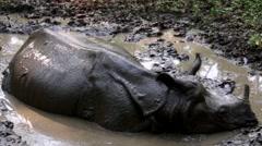 Rhino in Nepal Stock Footage