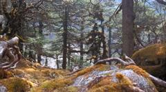 Jungle in Himalaya mountains, Nepal - stock footage
