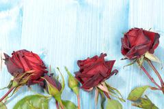 Red Roses on a Flat Layer - stock photo