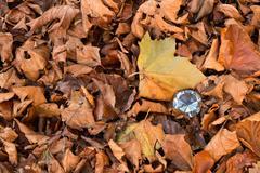 Dimond Autumn Stock Photos