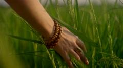 Hand running through tall grass Stock Footage