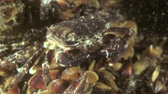 Mass spawning of polychaete worm (Nereis sp.). Stock Footage