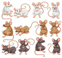Mouse with different fur color Stock Illustration