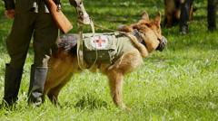 Shepherd dog on military training. Stock Footage