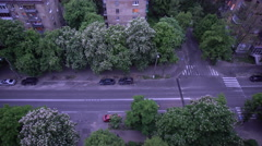 Tree-Lined Street - stock footage