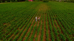 A farmer and consultant extract a soil sample from corn field_0211 Stock Footage