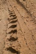Low angle view vertical CU  muddy jungle road with knobbed tire tracks headin Stock Photos