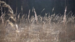 Dry grass in the sunlight Stock Footage