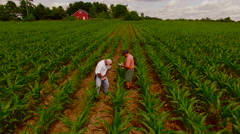 A farmer and consultant extract a soil sample from corn field_0211 - stock footage