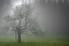 Lone tree with fog Stock Photos