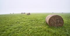 Silage on meadow Stock Photos