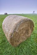 Silage on meadow - stock photo