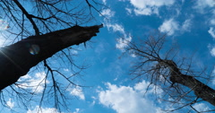 Large trees in the background moving clouds Stock Footage