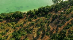 Aerial shots of palm flat on the seashore. Thailand. N. Stock Footage