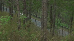 The road that runs through the forest - stock footage