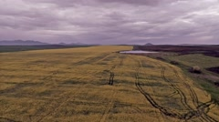 Aerial Footage of a Rapeseed Crops Stock Footage