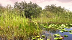 The amazing nature of the Everglades in Florida Stock Footage