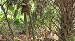 Typical vegetation in South Florida Stock Footage