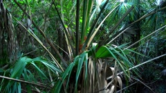 Amazing wild nature in the Everglades in Florida - jungle like Stock Footage