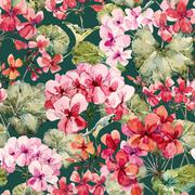 Watercolor geranium pattern - stock illustration