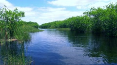 Beautiful wildlife in nature of the Everglades in Florida Stock Footage