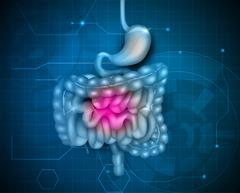 Gastrointestinal tract - stock illustration