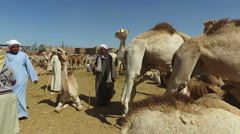 Camel market in Daraw, Egypt Stock Footage