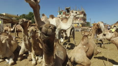 Closeup of camels at Camel market in Daraw, Egypt Stock Footage