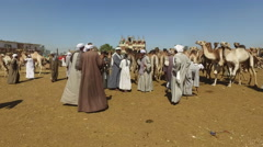 Local camel salesmen on Camel market. Stock Footage