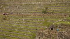 Inca terraces in Machu Picchu in Peru Stock Footage