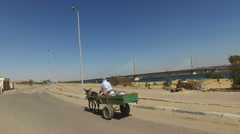 Local man riding a donkey cart, Egypt - stock footage