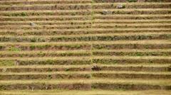 Inca terraces (PERU, South America) Stock Footage