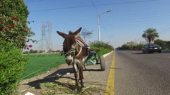 Donkey cart alongside road in Valley of Kings, Luxor. - stock footage