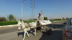 Local man riding a donkey cart in Luxor - stock footage